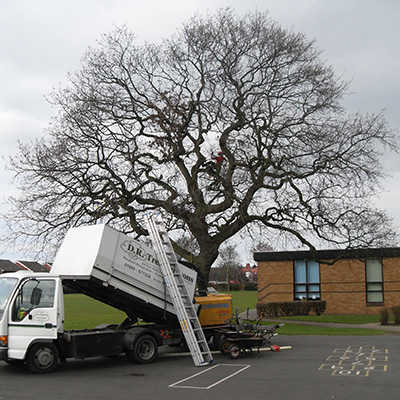 DR Tree Surgeons are trusted contractors to many county councils