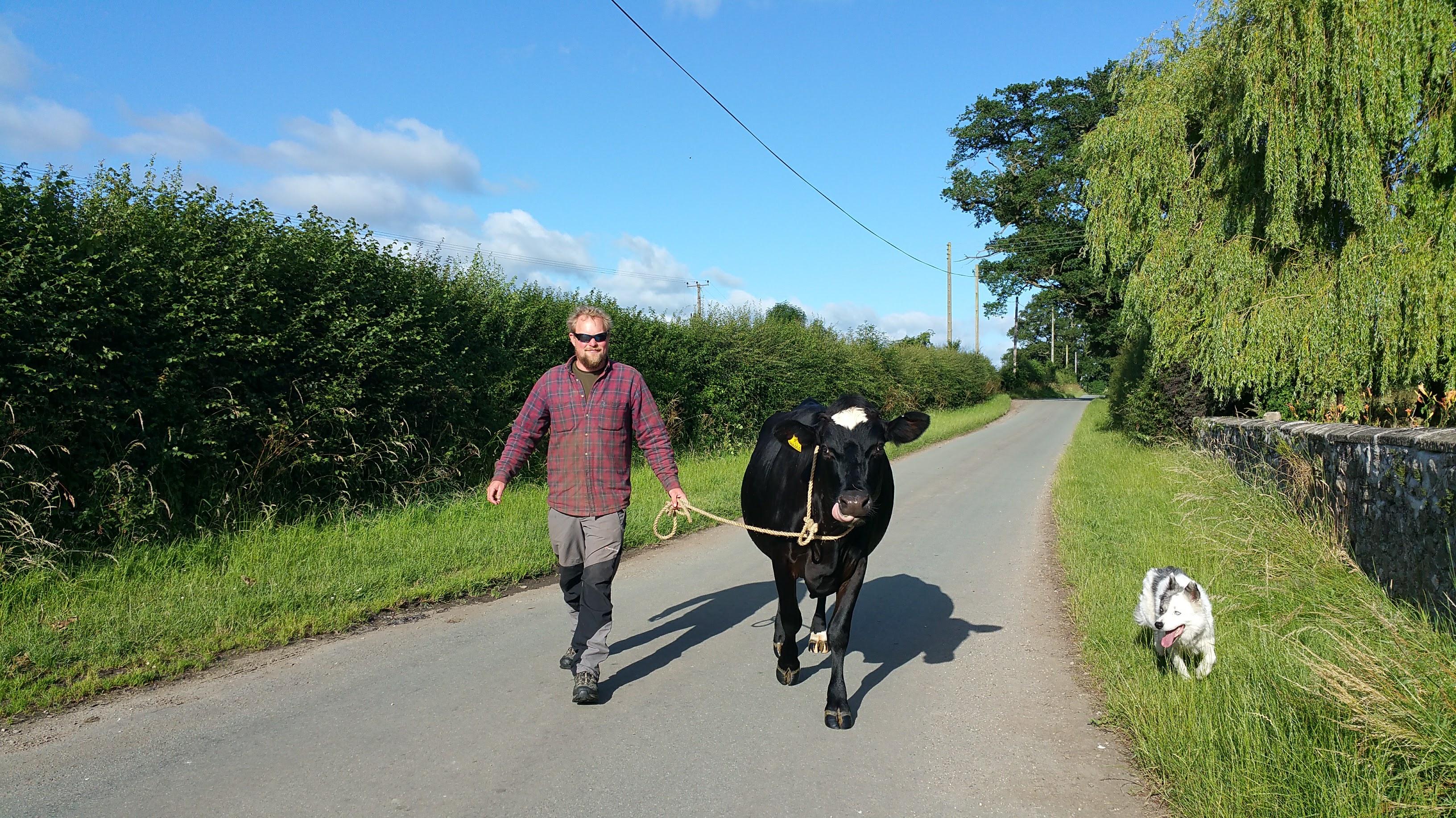 Setting up my micro-dairy keeping calves at foot