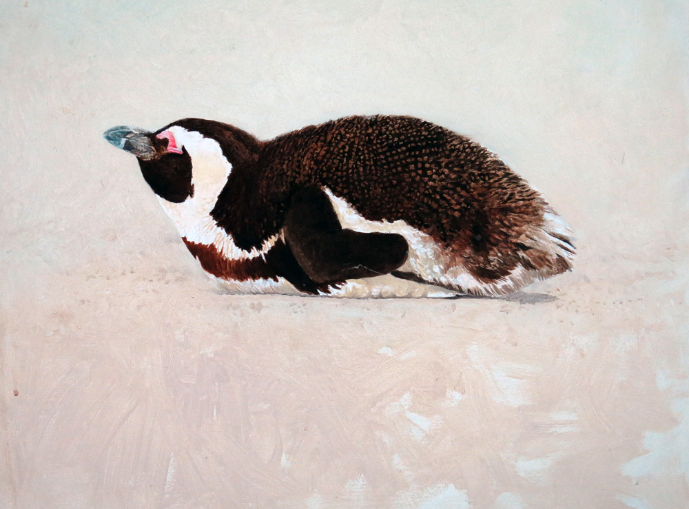 African penguin study  (2009) GBP 350
