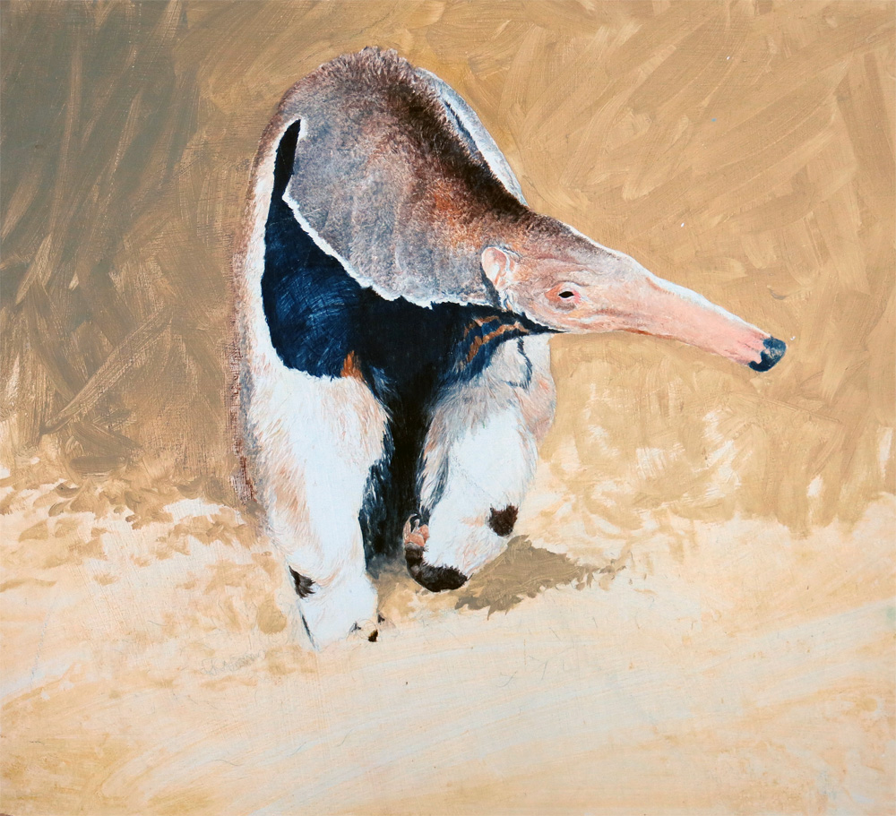 Giant anteater (study) (2006) not for sale
