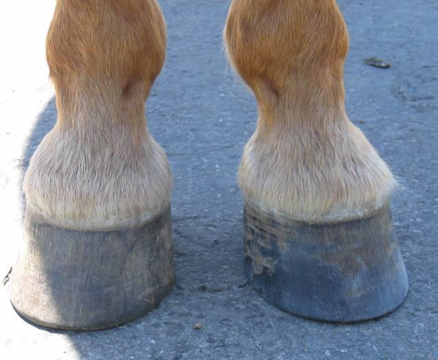 Hoof Well