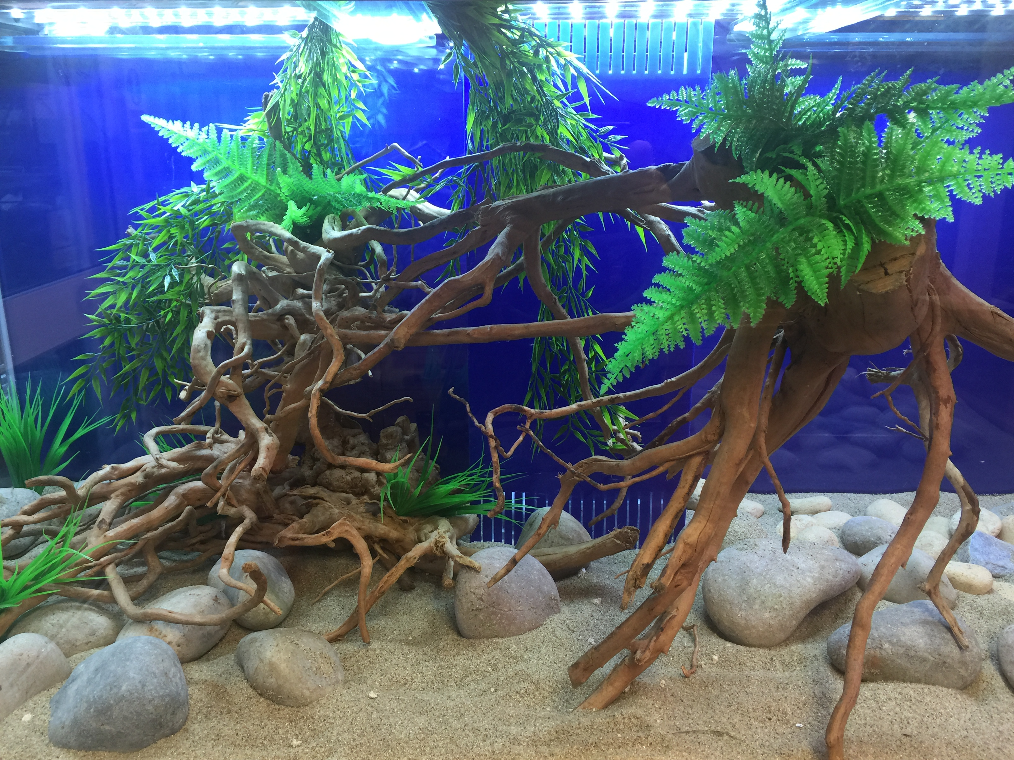 how to make money in happy aquarium