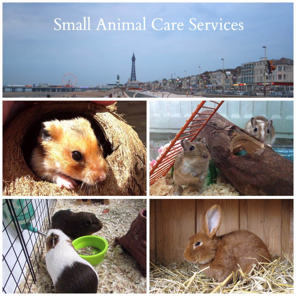 Blackpool Small Pet Care, Feed & Clean Services