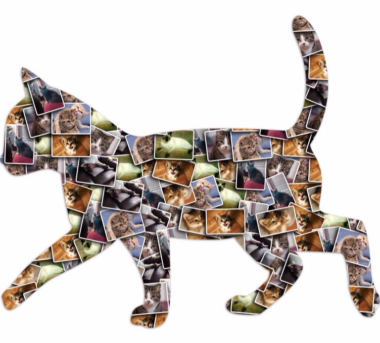 Fylde Pet Care's Cat Collage