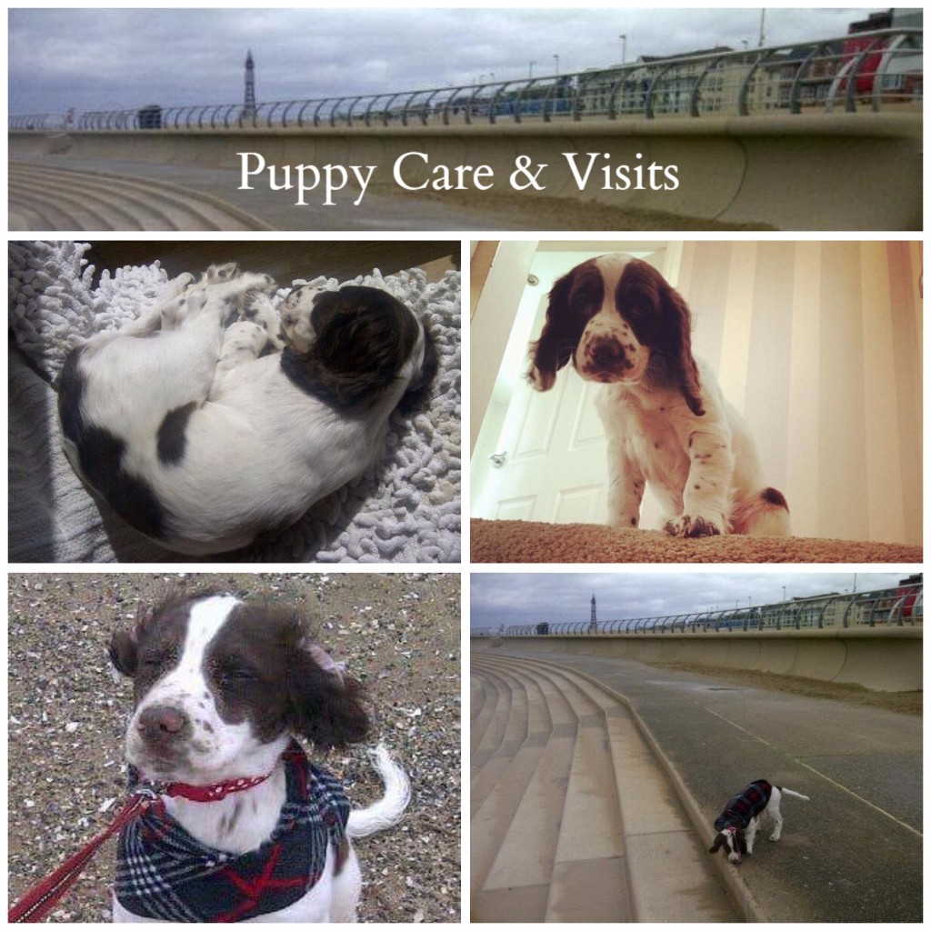 Blackpool Puppy Visits and Care