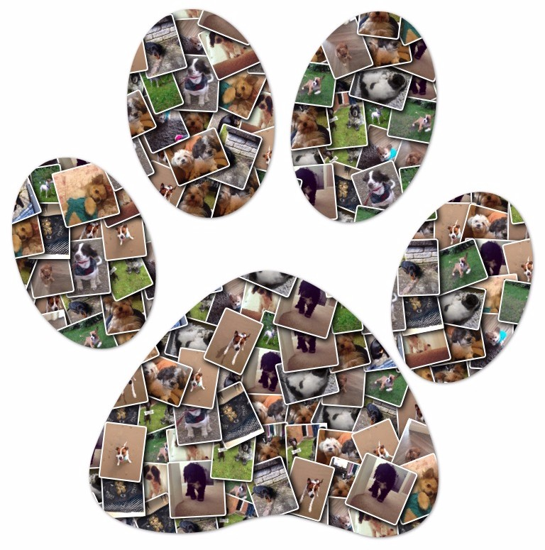 Fylde Pet Care's Paw Print Collage