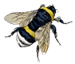 bee75png