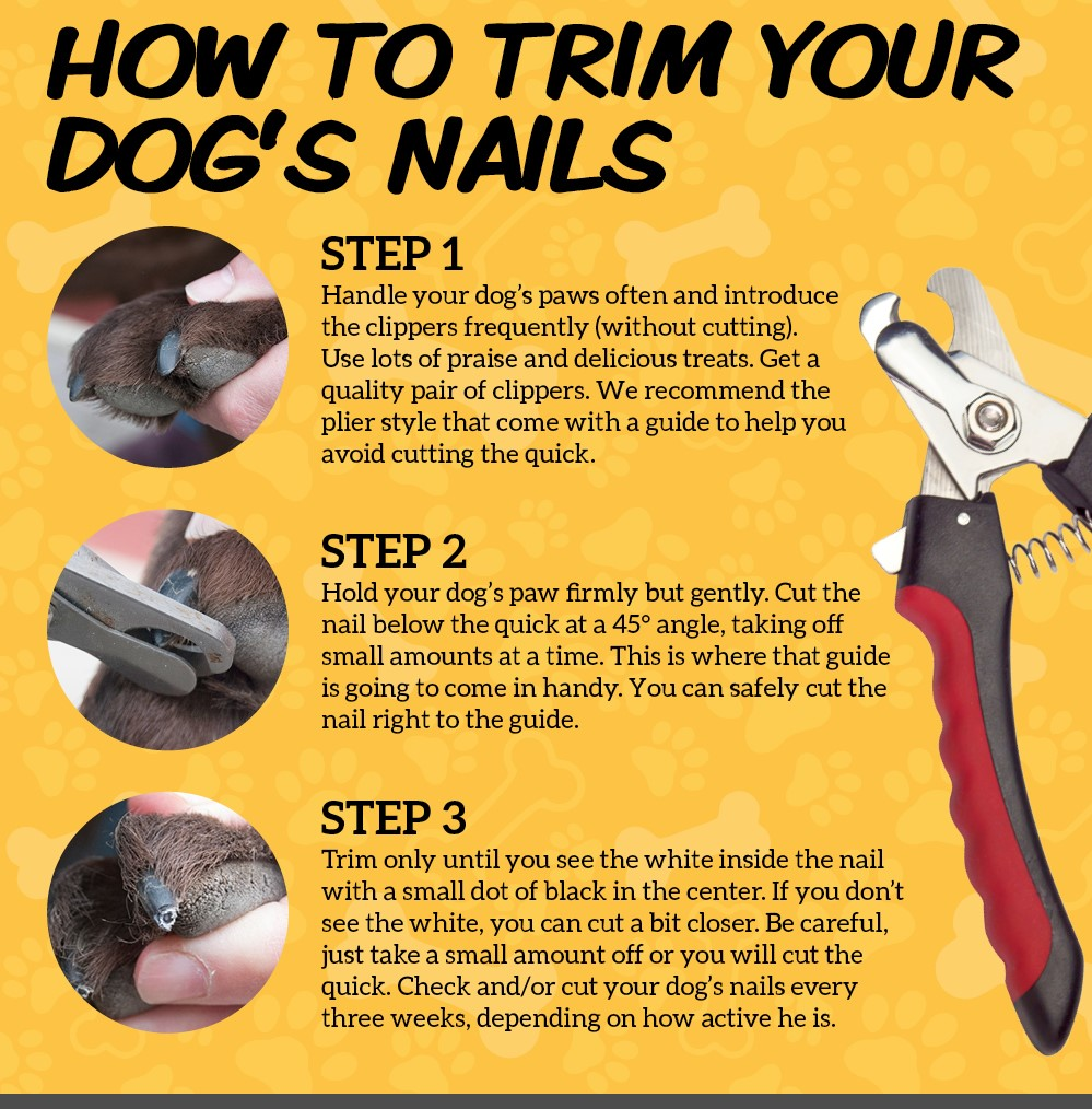 How-To-Trim-Your-Dogs-Toe-Nails-DNMjpg