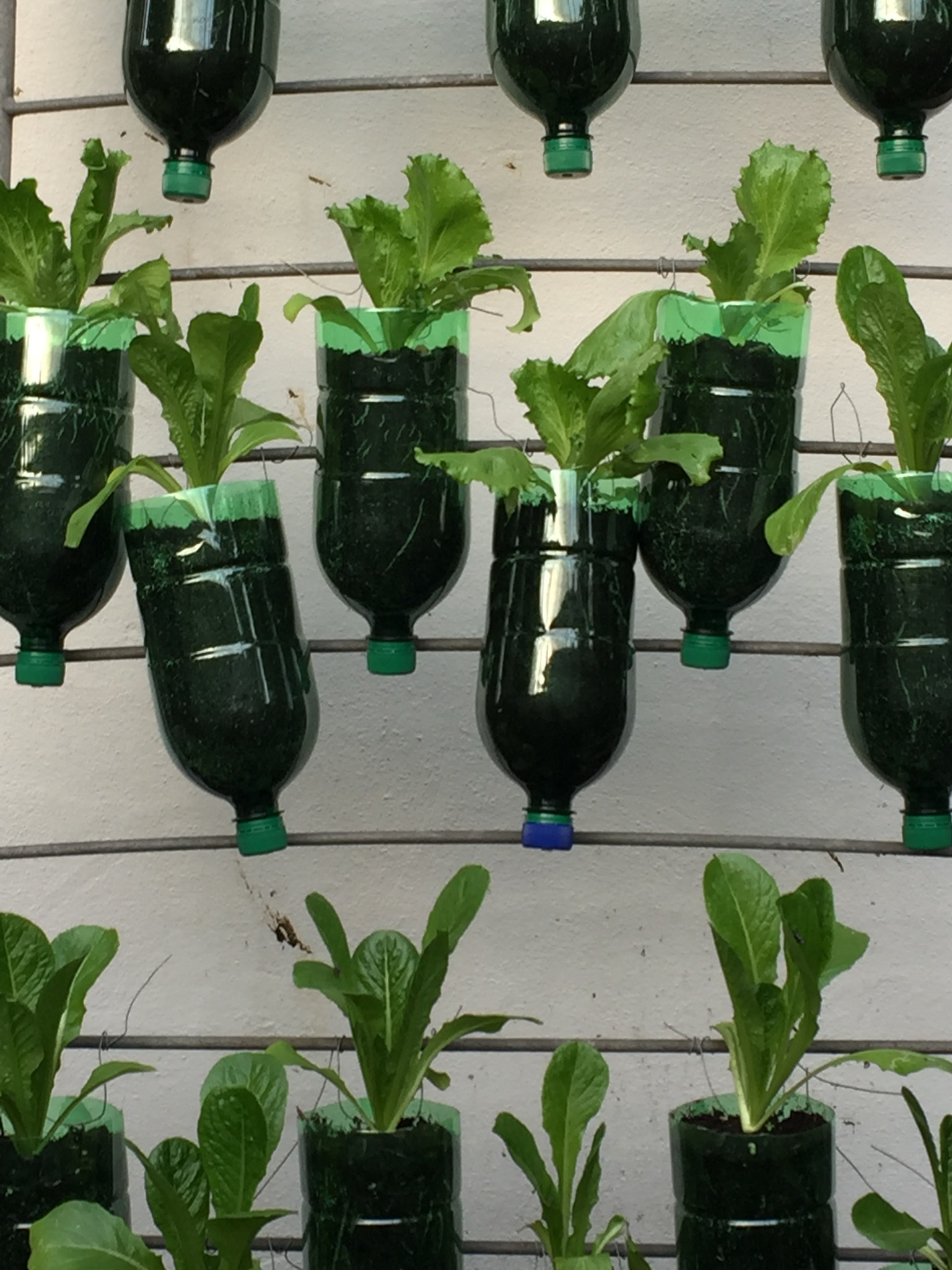 Water Bottle Salad Wall