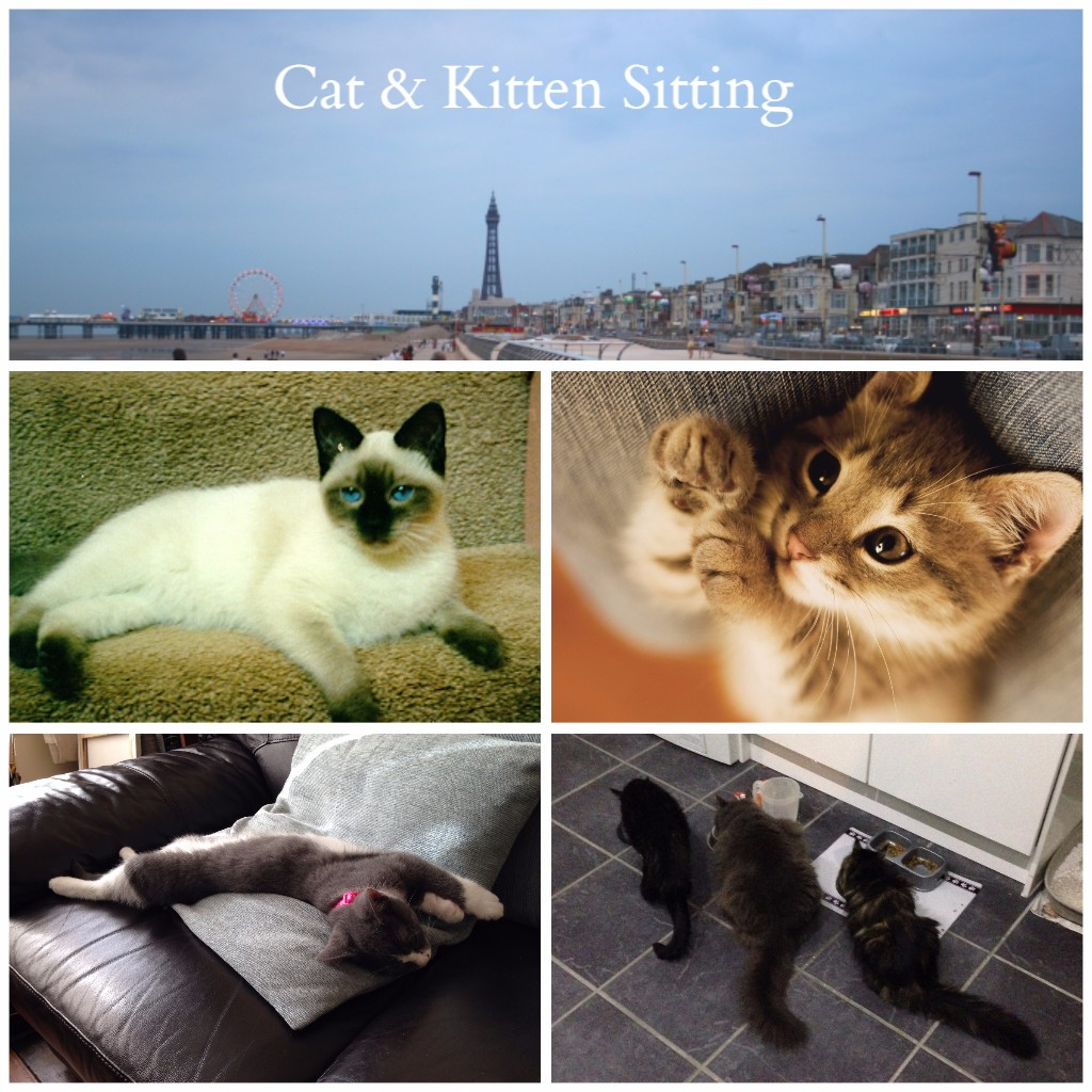 Blackpool Cat Sitting and Kitten Care Services